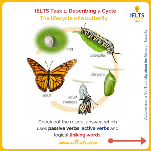 IELTS Task 1 Writing How to describe a natural cycle